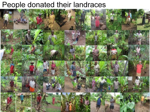 people_donate_ensete_Sh